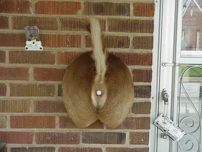 Taxidermist Doorbell