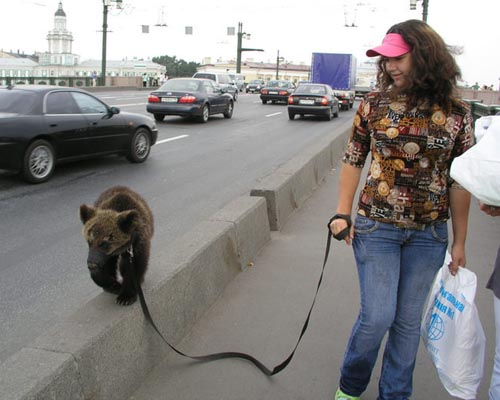 Pet Bear Walk