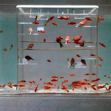 Birdcage Submerged In A Fish Tank ? Funny, Bizarre, Amazing Pictures ...