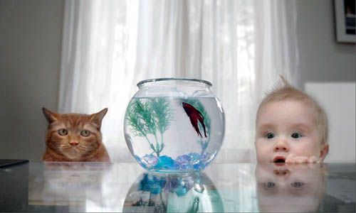 Cat and Baby Watching Fish