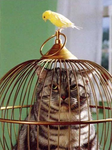 Cat In A Bird Cage