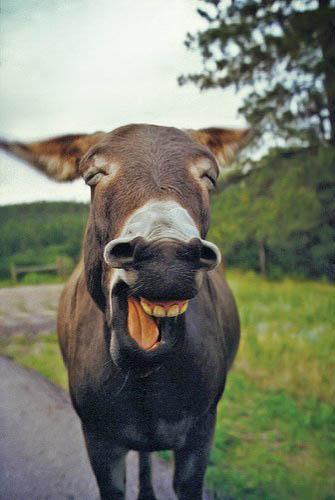 Mugging Donkey