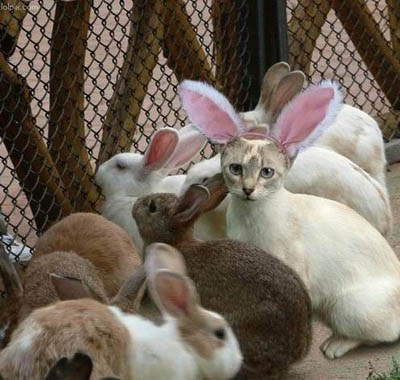 http://www.foundshit.com/images/easter-bunny-cat.jpg