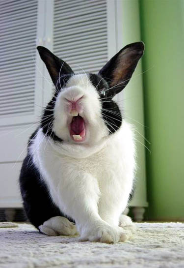 Funny Rabbit Expression
