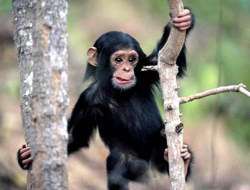 Monkey Expression
