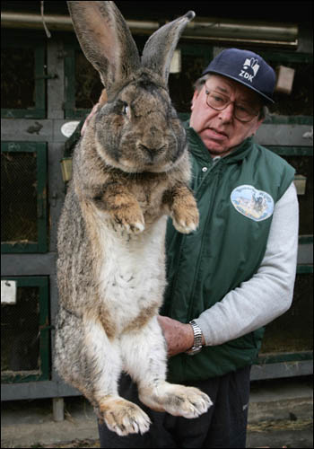Giant Rabbit | Karl Szmolinsky