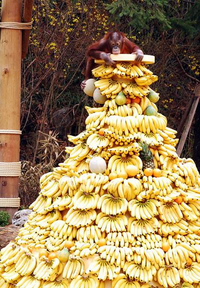 Banana Monkey Pile