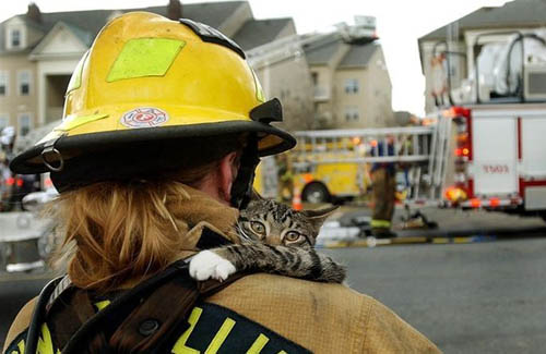 Firefighter Rescuing Cat