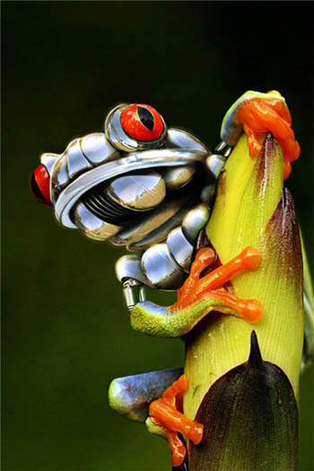 Mechanical Frog Art