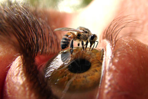 Photoshopped Picture Of A Bee On An Eye