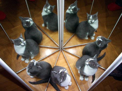 Cat Reflection Photography