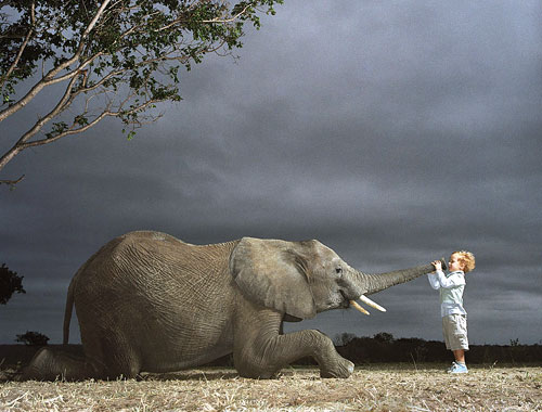 Elephant Air Blast