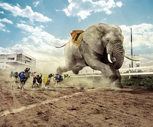 Elephant vs Greyhound Track