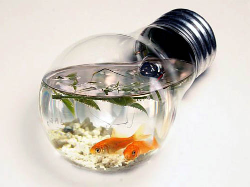 Light Bulb Goldfish Tank
