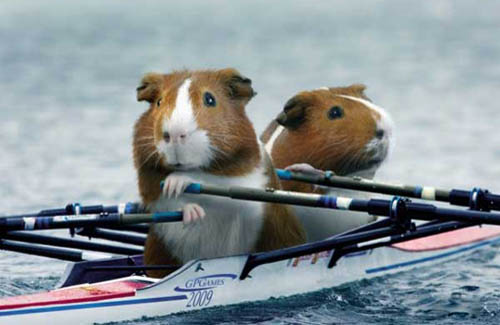 Guinea Pig Games | Double Skulls Rowing