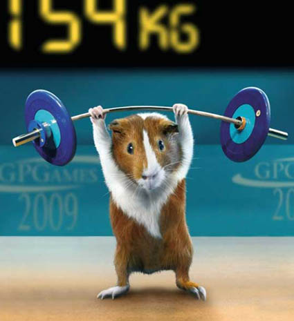 Guinea Pig Games | Weightlifting Barbells