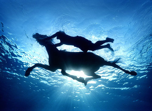 Swimming Horse Photography