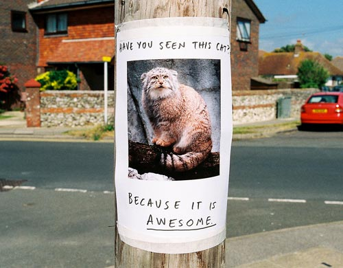 Funny Lost Pet Sign