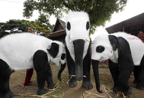 Panda Elephants