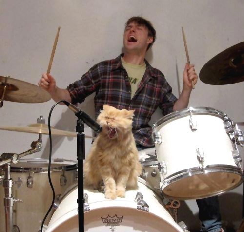 Rock & Roll Kitty Cat