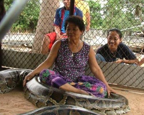 Python Petting Zoo