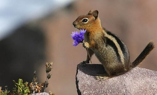Squirrel Holding Purple Flower