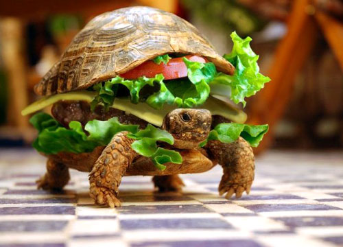 Turtle Hamburger