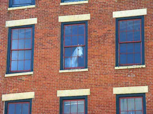 Horse In An Upstairs Window