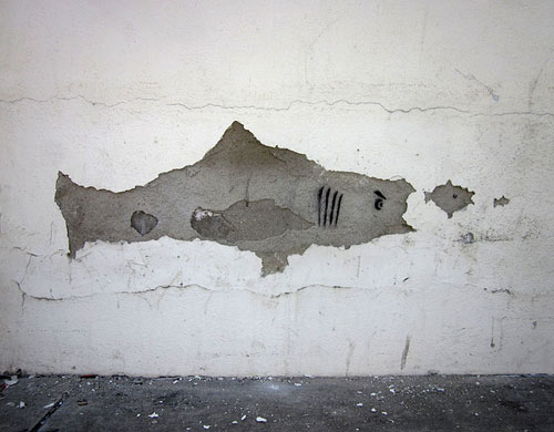Stucco Wall Shark