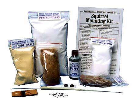 Squirrel Taxidermy Mounting Kit