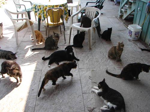 RAPS Cat Sanctuary | Vancouver, Canada
