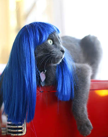 Blue Hair Wig For Cats