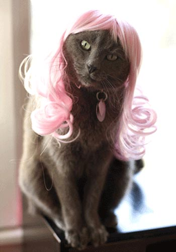 Pink Hair Wig For Cats