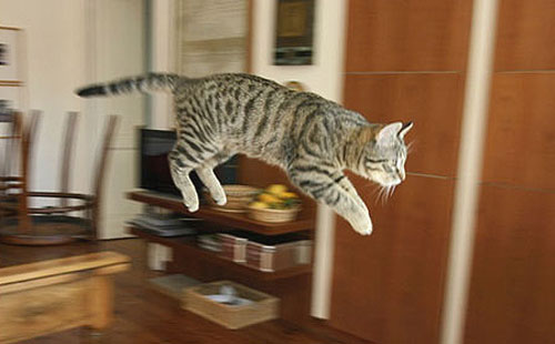 Freeze Frame Jumping Cat Photo