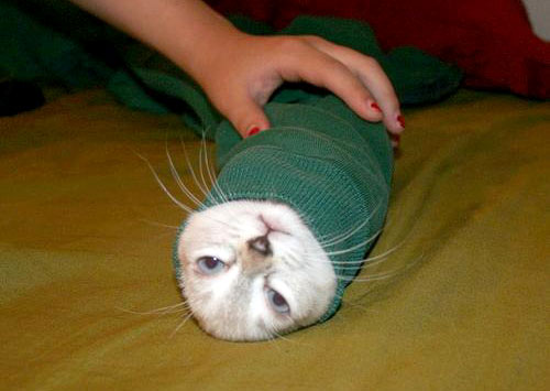 Cat In A Sweaters Sleeve