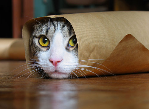 Cat In A Paper Roll