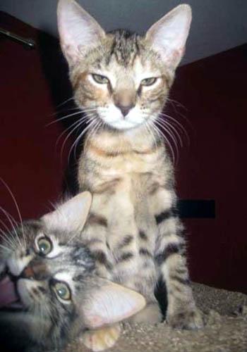 Funny Kitten Photobomber