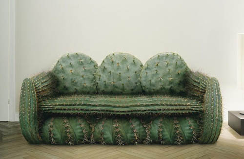 Sofa Made From Cactus