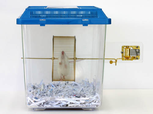 Hamster Powered Music Box