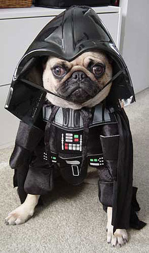 Pug Dressed in a Darth Vader Costume. via costumedogs