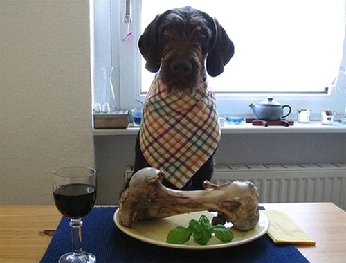 Dog At Dinner Table With Huge Bone