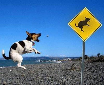http://www.foundshit.com/pictures/dogs/dog-jumping-sign.jpg