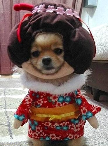 Geisha Dog Costume