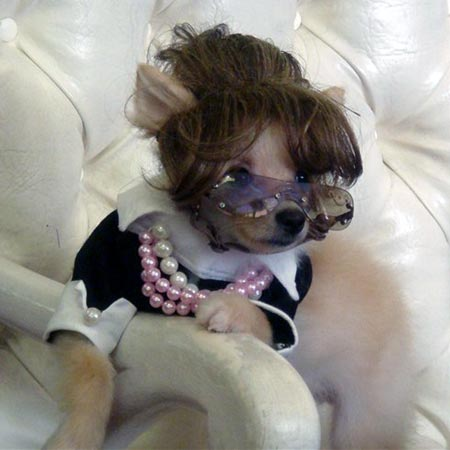 Puppy Wearing Sarah Palin Costume