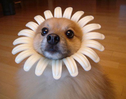 Puppy Flower Costume