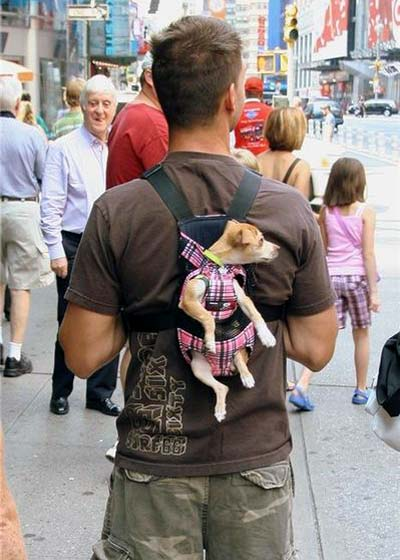 Mans Best Friend Dog Carrier