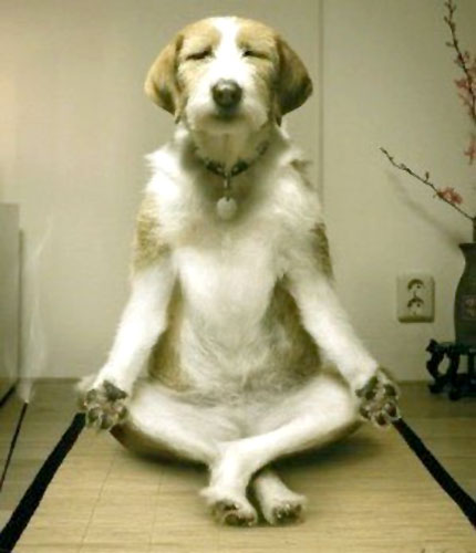 Dog In A Lotus Pose Meditating