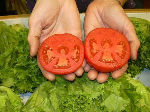 Angels in Tomatoes