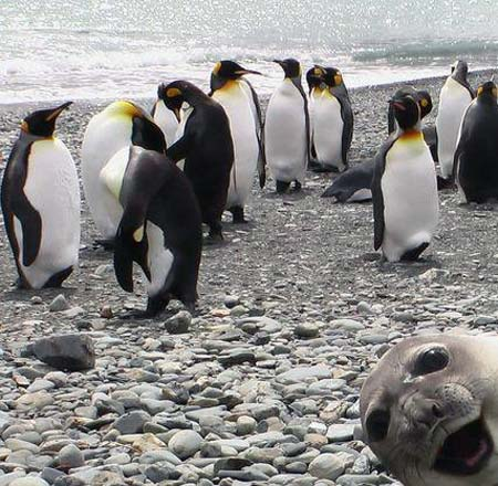 Photobombing Seal