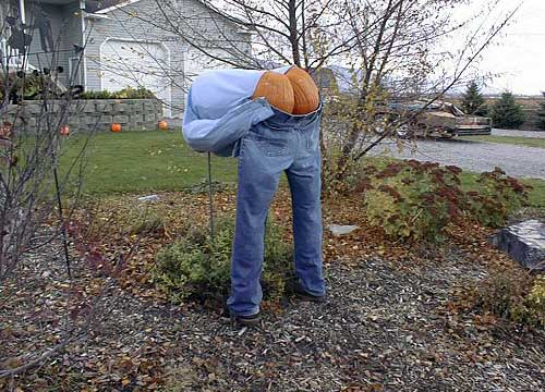Mooning Scarecrow Pumpkin Butt